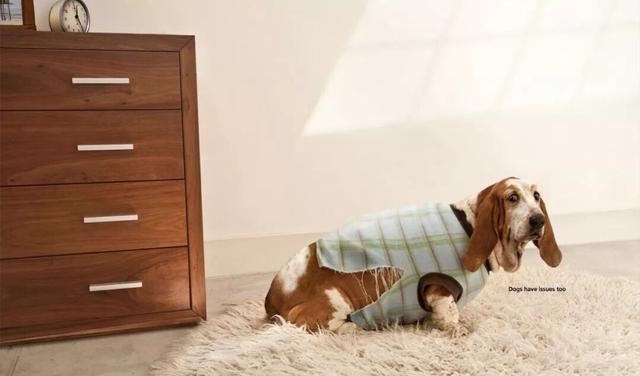 狗狗能不能看见人看不见的东西